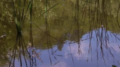 Reed and blue sky reflected in water - stock footage