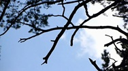 Looking up at the clouds through the trees Stock Footage