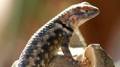 Beautiful Lizard Eyes Stock Footage
