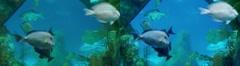 Aquarium 3D - stock footage