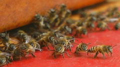 Bees near beehive Stock Footage