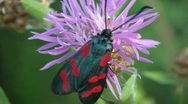 Stock Video Footage of Beautiful Butterfly On A Flower
