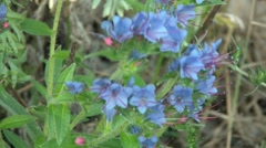 Beautyful Blue Flowers Stock Footage