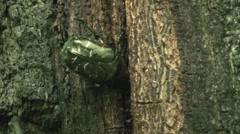 Big Beautiful Beetle Closeup - stock footage