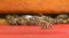 Bees at bee-yard Stock Footage