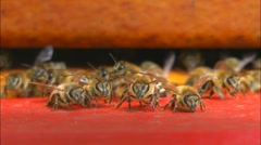Bees at bee-yard Stock Footage