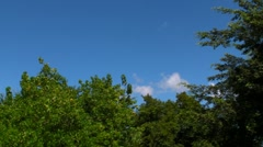 Tree Tops and Blue Sky Stock Footage