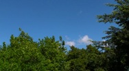 Stock Video Footage of Tree Tops and Blue Sky
