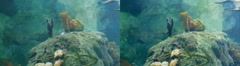 Aquarium II 3D Stock Footage