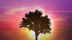 sunrise big tree growth HD Discount Period - stock footage