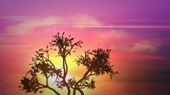Sunrise africa tree HD Stock Footage