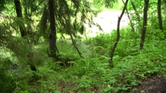 Swamp Stock Footage