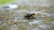 Insect fly Stock Footage