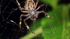 Spider in an orb web at night Stock Footage