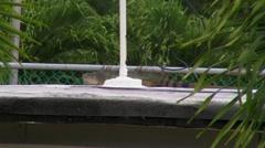 Big Iguana on  roof Stock Footage