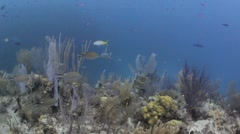 Healthy Coral Reef Stock Footage