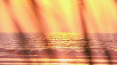 Sunrise Beach Birds Stock Footage