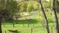 Stock Video Footage of Tracking shot of horses through trees