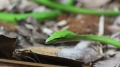 Miniature snake Stock Footage