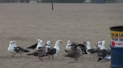 Group of Seagulls on Beach - stock footage