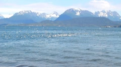 Seagulls on the water of the bay Stock Footage
