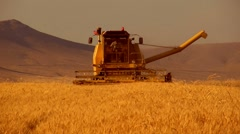 Wheat harvesting Stock Footage