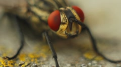 Insect fly - stock footage
