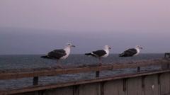 Seagulls take off - stock footage