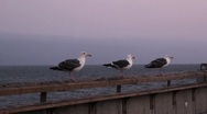 Stock Video Footage of Seagulls take off