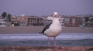 Stock Video Footage of Seagull close up leave frame