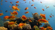 Coral reef red fish Stock Footage