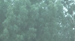 HD 1080 shot of summer downpour. Stock Footage