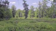 Peaceful Marsh Stock Footage