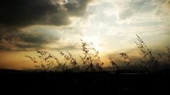 sunset grass - stock footage