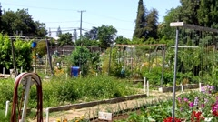 Community Garden In City- Wide Shot Stock Footage