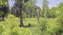Marsh Wetlands Swamp - stock footage