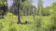 Stock Video Footage of Marsh Wetlands Swamp