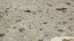 Fly wanders around dry cement as it begins to rain Stock Footage