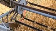 Stock Video Footage of Wheat Harvesting