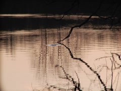 Sunset Pond Lake Waves Water Droplets Fish Jump Silhouette Trees Ambient Stock Footage