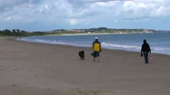 Walking the Dogs Stock Footage