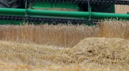 Stock Video Footage of harvesting wheat