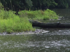 Storm Pond Lake River Bank Light Rain Log Vegetation Stock Footage
