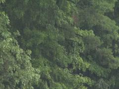 Rain Prestorm Vegetation Green Foliage Stormy Stock Footage