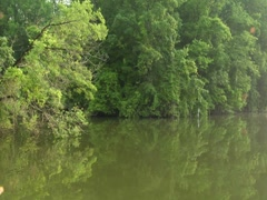 Stabilized River Scenic Nature Trees Vegetation Travel Boat Wildlife (1) - stock footage