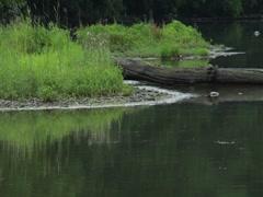 Calm Serene River Lake Side Bank Prestorm Log Water Stock Footage