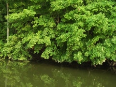 Stabilized River Scenic Nature Trees Vegetation Travel Boat Wildlife (6) Stock Footage