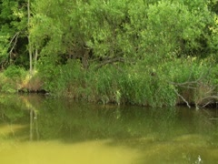 Stabilized River Scenic Nature Trees Vegetation Travel Boat Wildlife (2) Stock Footage