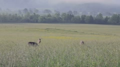 Deer grazing Stock Footage