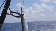 Deep sea fishing bait. Stock Footage